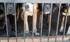 Šokeeriv juhtum: Hiinas peatati kaubik, mis oli täis varastatud koeri, kes olid mõeldud söögilauale minema