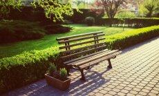 Praegu on parim aeg istutada hekki. Miks?
