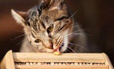 Kass kipub süües kiiruga toitu kugistama? Nipid, mis selle puhul aitavad