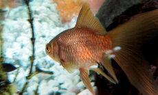 Mull-mull-mull-mull väiksed kalad