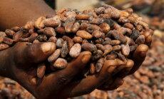 Saak väiksem, kvaliteet vilets: kakaoga võib tänavu kitsaks minna