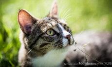 Igaühe jaoks on kuskil keegi: tserebellaarset hüpoplaasiat põdev kass leidis armastava pärskodu