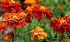 Nutika aedniku ABC ja ilusad taimed on tagatud