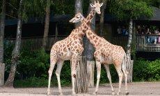 Mati Kaal soovitab: pärlite pärl Burgersi loomaaed