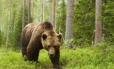 Kolmveerand Soomest on metsaga kaetud: loodus on põhjanaabrite rahvuslik aare