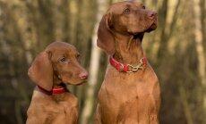11 lõhna, mida koerad tunnevad, aga inimesed mitte kunagi