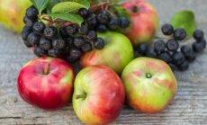 arooniad, õunad
