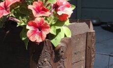 Kolm vahvat ideed aeda: lillekast ja kaks lauda