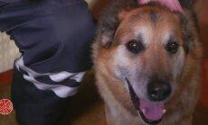 VAATA: Kuidas Rein ja koer Poku tänu suurele südamele sõbraks said?