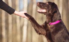 4 koera treenimise viga: kas sa tunned end ära ja oled mõnes süüdi?