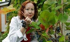 Ajakirjanik Silja Lättemäe viinamarjad