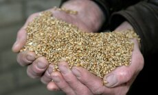 Tänavusel viljelusvõistlusel hinnatakse esmakordselt lisaks saagikusele ja tulukusele ka kvaliteeti.