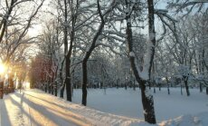 Морозный денёк в старом парке.
