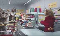 Hullumeelne VIDEO: Vaata, kuidas käituksid kassid, kui neid supermarketisse toidu järgi saata