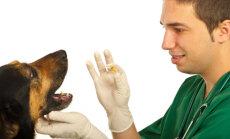 Kasulikke nippe: kuidas oma lemmikloomale tabletti anda?
