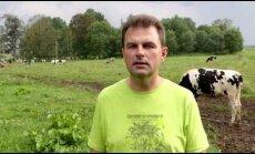 VIDEO: Andres Tamm on aretanud Eesti parima piimakarja