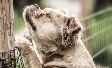 PÕNEV: 7 olukorda, miks kipuvad koerad aiast ära jooksma ja kuidas sellest harjumusest jagu saada?