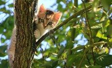 10 huvitavat fakti vastsündinud kassipoegade kohta