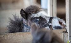 Päev Konju Mõisa talus: loomasõbraliku piimafarmi argielu ja tervistav kitseteraapia