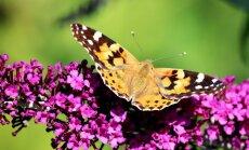 Vaata, milliste taimedega saad oma aia muuta liblikate paradiisiks