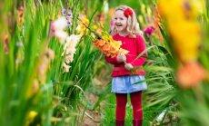 Gladiool on vastupidav lõikelill ningkooli või lasteaeda mineku puhuks just septembri alguses veel aiast võtta.