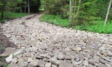 Leili metsalood: Metsatee edeneb visalt