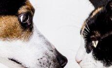 Koer, kass, hamster: leiame lahendused peamistele lemmikloomaomanike probleemidele