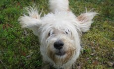 Ekströmi marsi ajal kolmeks päevaks ära kadunud koer Pätu