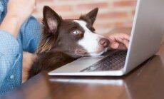 Lemmiklooma registreerimine portaali eesti.ee kaudu on lihtne