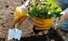 Kuuaiandus: taimede istutamine vastavuses kuufaasidega tagab parema kasvu ja saagi