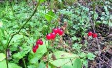 Leili metsalood: Uued avastused