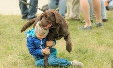 Labradoride näitus Saku mõisas