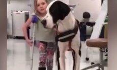 Südamlik VIDEO: Truu dogi, kes õpetab last kõndima