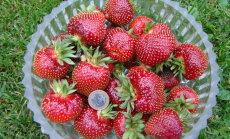 LUGEJA KIRJUTAB: Ilusad maasikad ei ole mingi pettus!