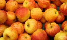 RETSEPT: Hõrk ja marjane õunakook, mis on kõhule kerge