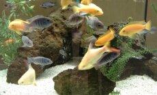 Algaja akvaristi esimesed kalad