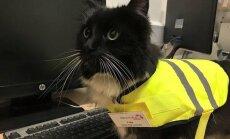 FOTOD: Töökas raudteejaama kass sai ametikõrgendust: tavalisest hiirepüüdjast sai näriliste tõrje ülem