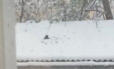 VIDEO VAHVAST VAATEPILDIST: Vares naudib talverõõme!
