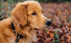 Milline kaela- või jalutusrihm koerale ja kassile valida