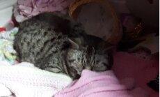 Vapper võitleja! Kass veetis auto pagasiruumis 11 päeva ilma toidu ja joogiveeta
