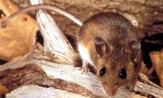 Teadlased: inimese lähedal elavatel loomadel on suurem kolju