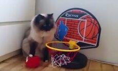 VIDEO: kass, kelle suurimaks hobiks on korvpallimäng