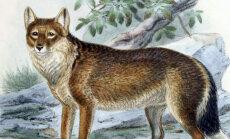 Vaata, need loomad, kes hiljuti elasid suurtel aladel, on inimese süül välja surnud