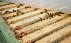 Gunnar Ülper ja mesitarud