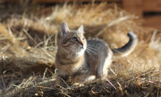 Saa teada, mida sinu kass öelda tahab! 10 erinevat häälitsust ja nende tähendused