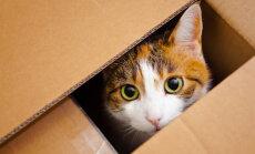PÕNEV: Mis põhjusel kassid pappkaste nii väga armastavad?