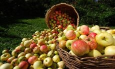 ПОДЕЛИТЕСЬ: а что вы готовите из яблок?