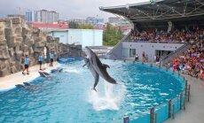 Bathumi delfinaariumi šõu paistab igati lustlik, aga mõttest, et delfiin tahaks ehk meres ujuda, on raske üle olla.