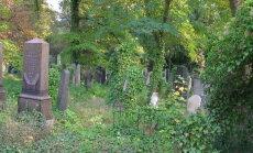 Заповедная зона. Кладбище в Берлине оказалось полно жизни