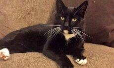 Perekond kaotas reisil oma kassi, millest 4 kuud hiljem sünnib uskumatu ime
